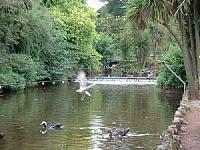 Dawlish Duck Pond / Stream